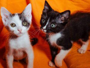 coppia di gattini sul divano
