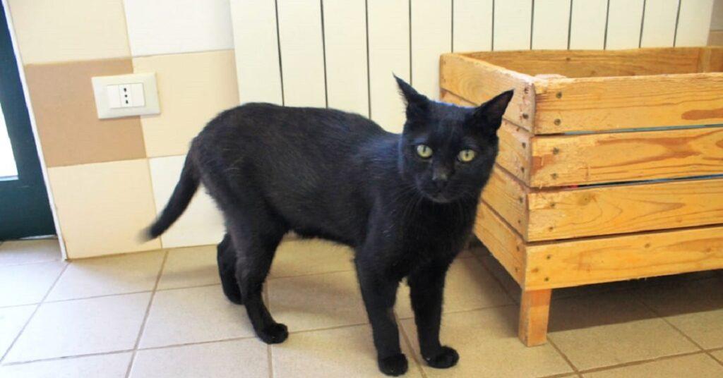 gatto nero nel gattile