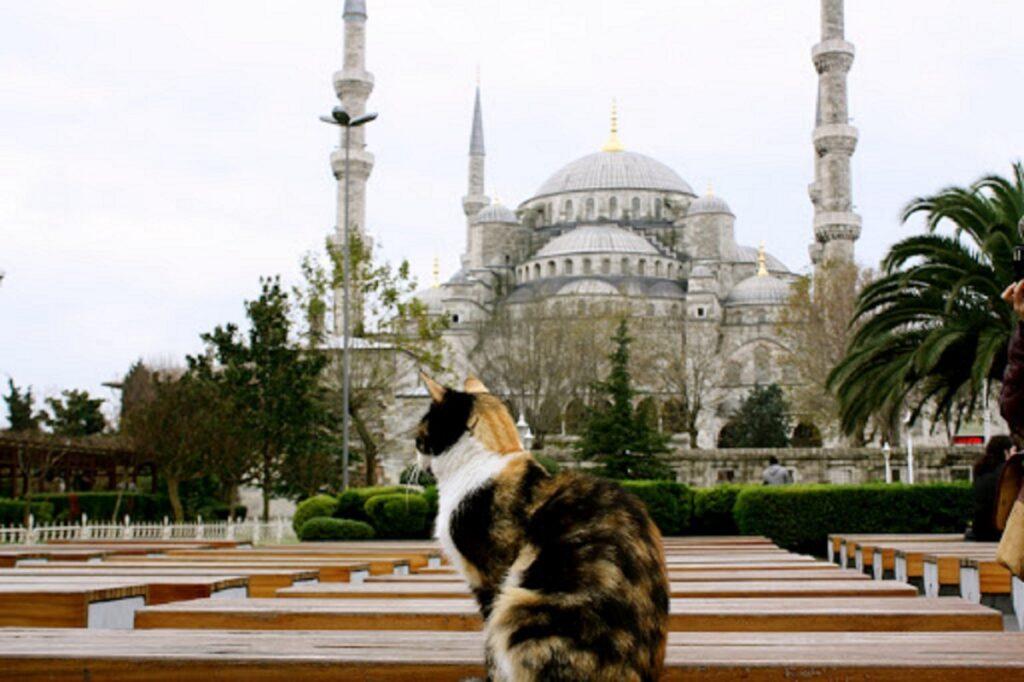 mamma grazie alla religione supera la paura dei gatti