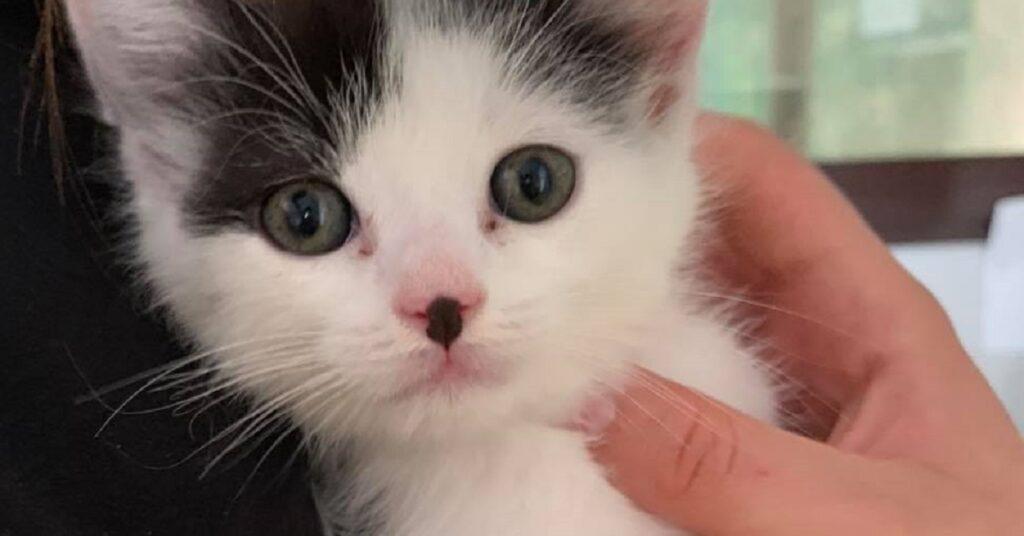 gattina con una macchina sul naso