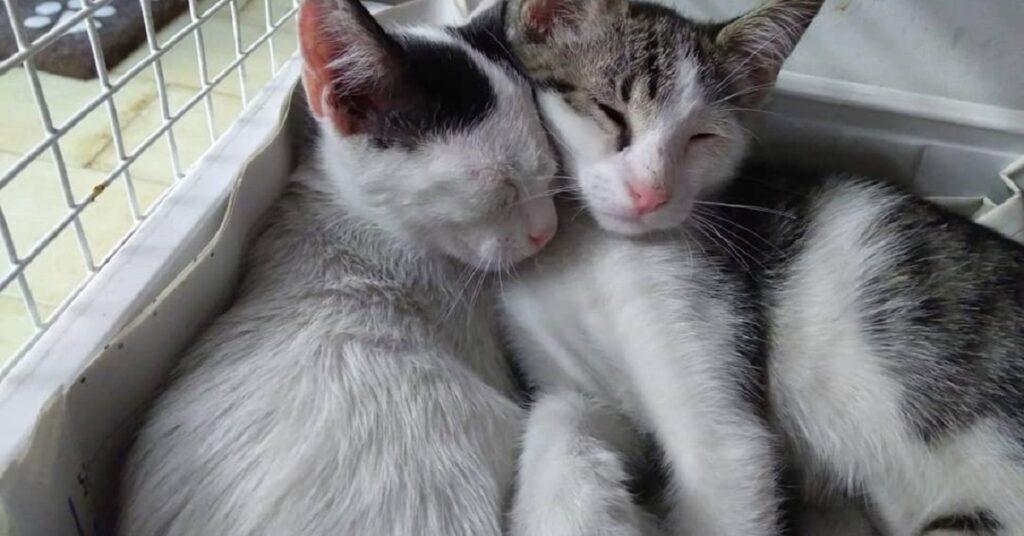 gattine dormono insieme