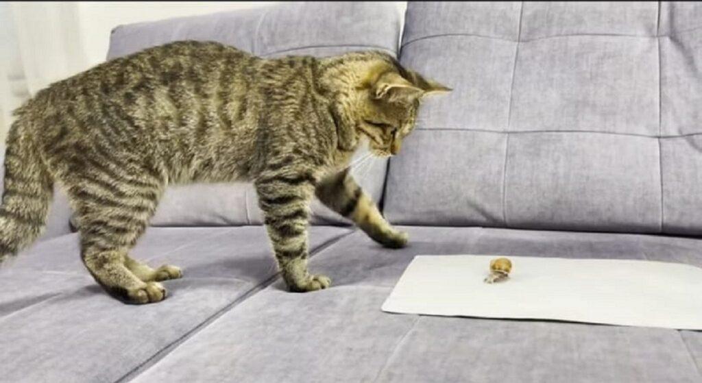 gatto e lumaca