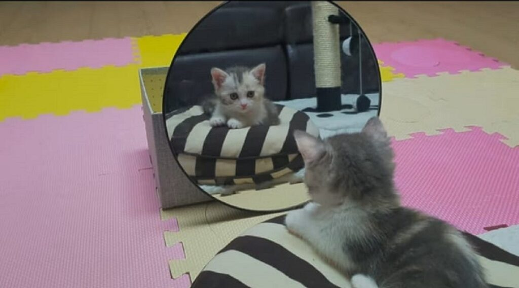 specchio prima volta