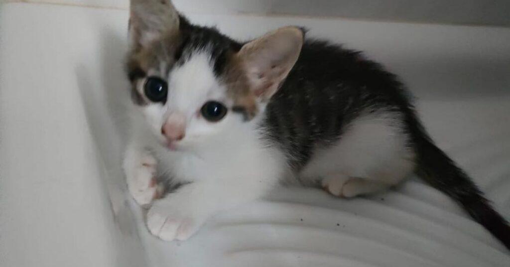 gattino in doccia