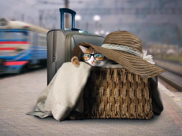 gatto viaggiatore