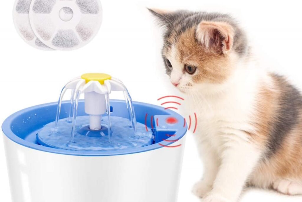 fontana per gatti