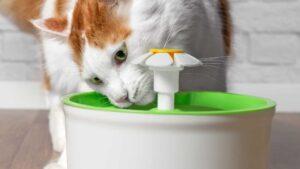 gatto che beve