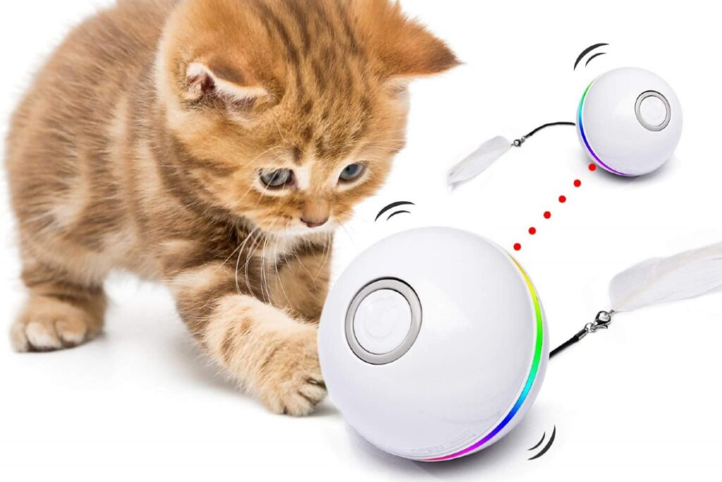 gattino che gioca con la pallina interattiva