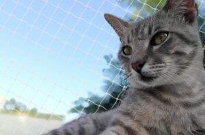 gatto in balcone in sicurezza