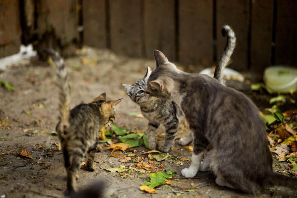 gatta e gattini grigi