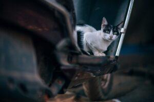 gatto su una moto