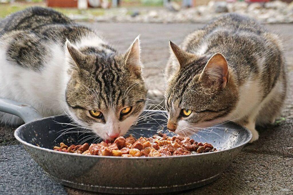 gatti dividono la ciotola