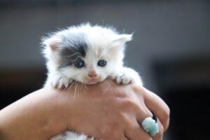 gattino piccolo
