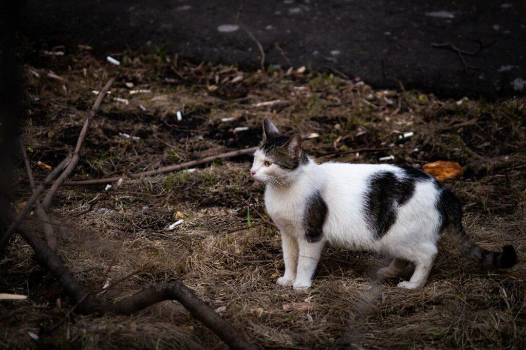 gattino in giardino