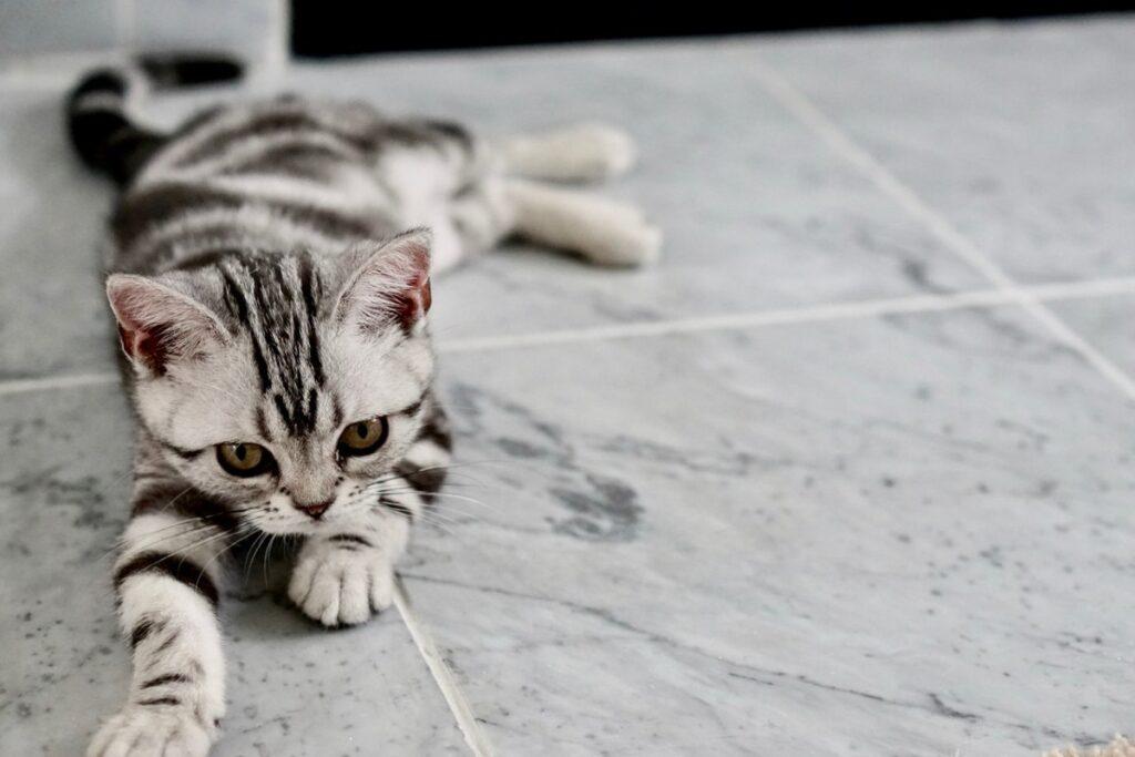 gattino sul pavimento