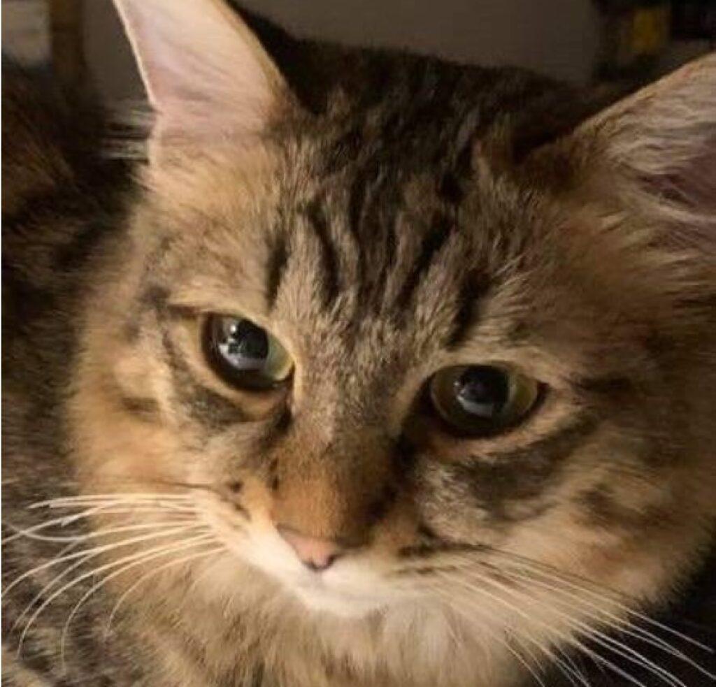 gatta orecchie lunghe con pelo