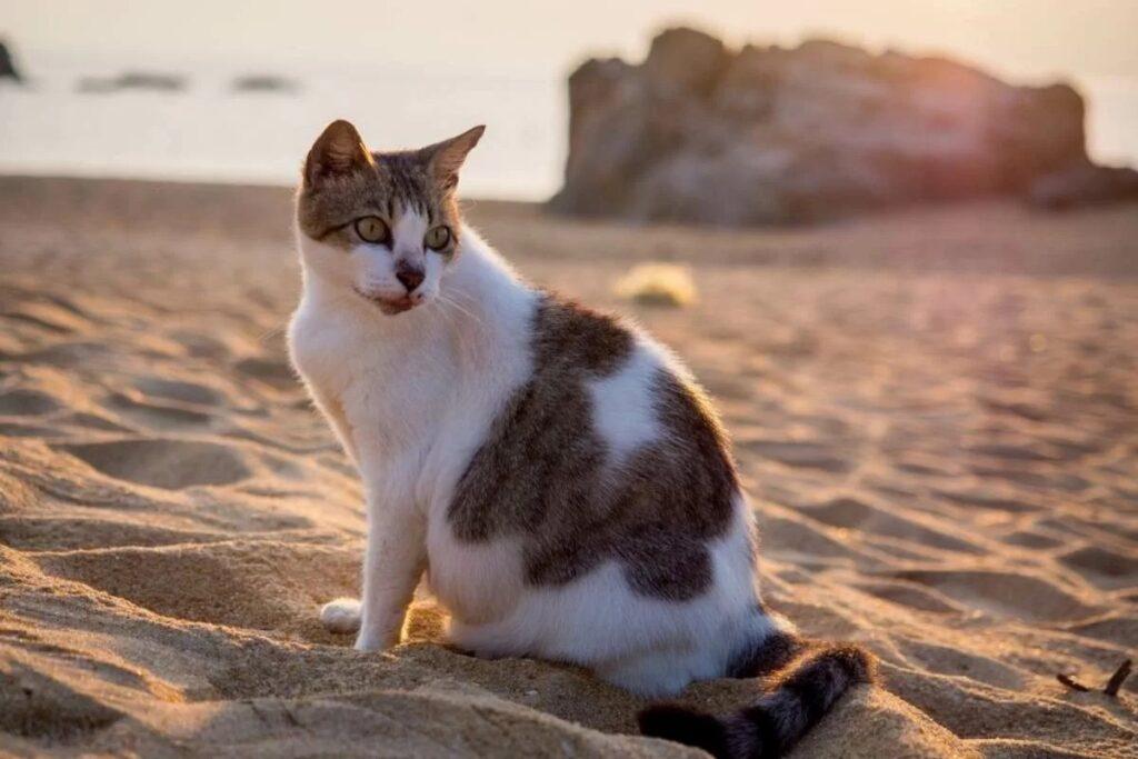 gatto sulla sabbia