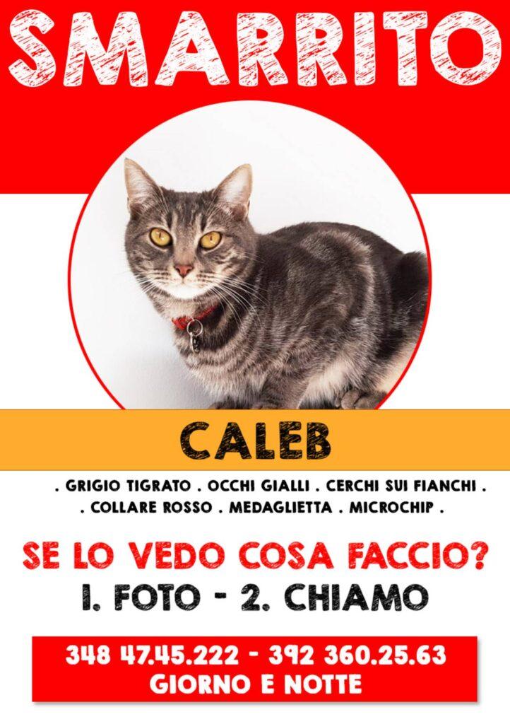 annuncio per ritrovare Caleb