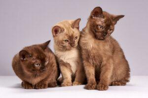 tre gattini simpatici