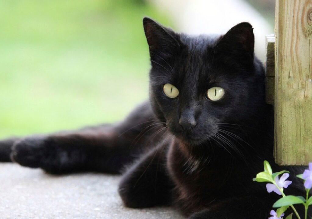 gatto disteso relax vicino prato