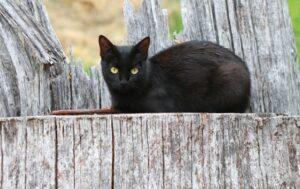 gatto newton sparisce senza lasciare tracce