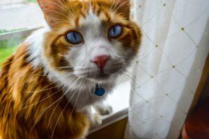 gatto bianco e arancione