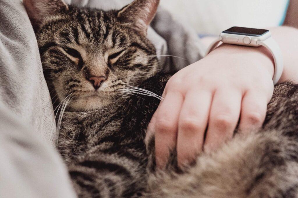gatto assonnato