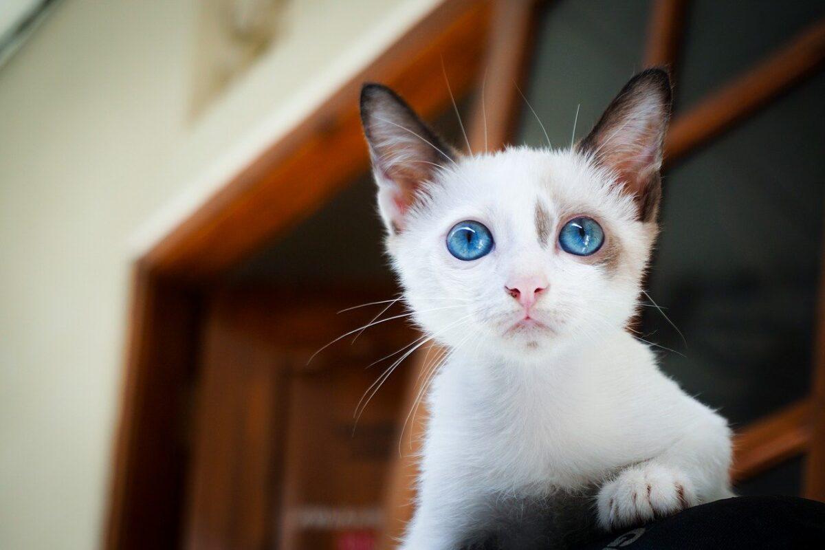 gatto sulla mensola