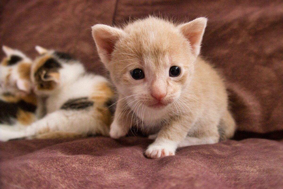 gatti cuccioli