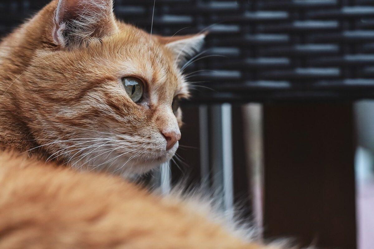 gatto sulla sedia