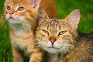 gatti insieme