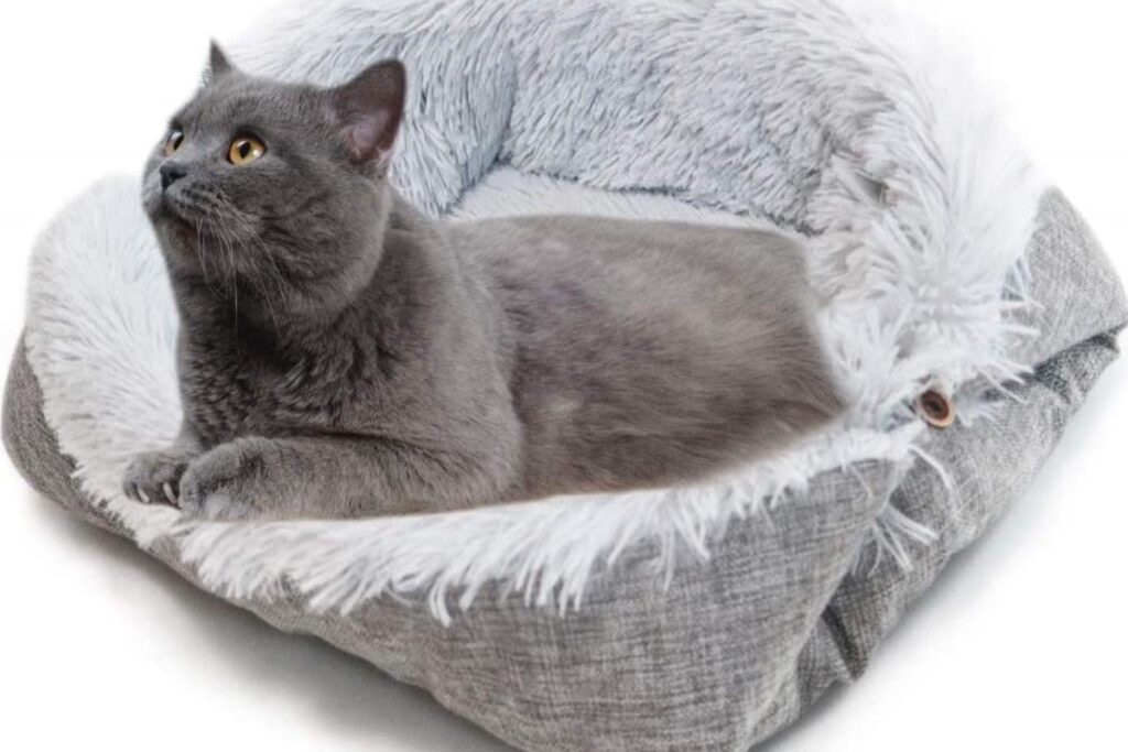 gatto nella cuccia di peluche