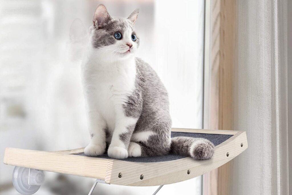 gatto su amaca alla finestra