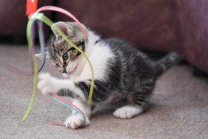 gattino che si diverte