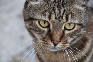 gattino occhi belli
