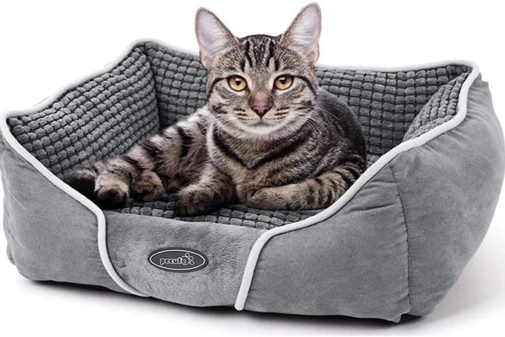 cuccia aperta per gatti