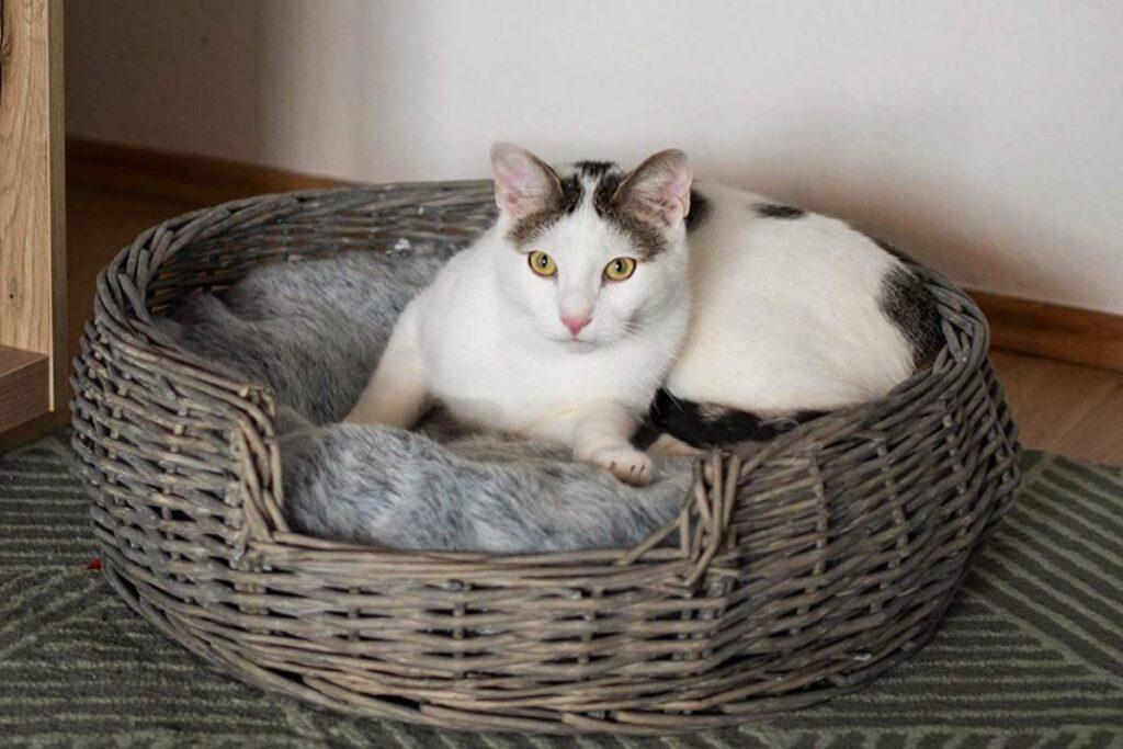 gatto nella cesta di vimini