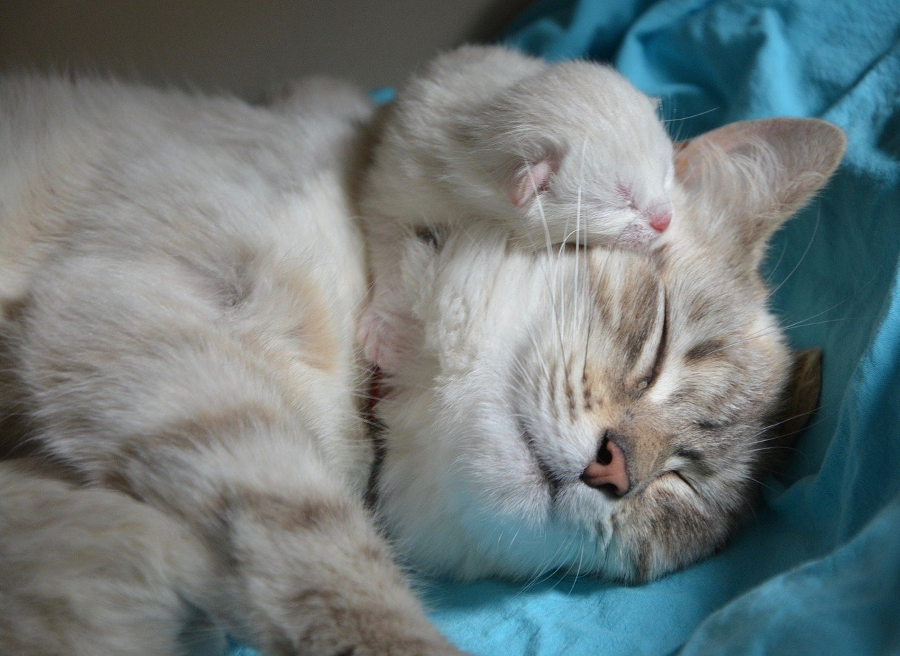 mamma gatto con piccolo gattino
