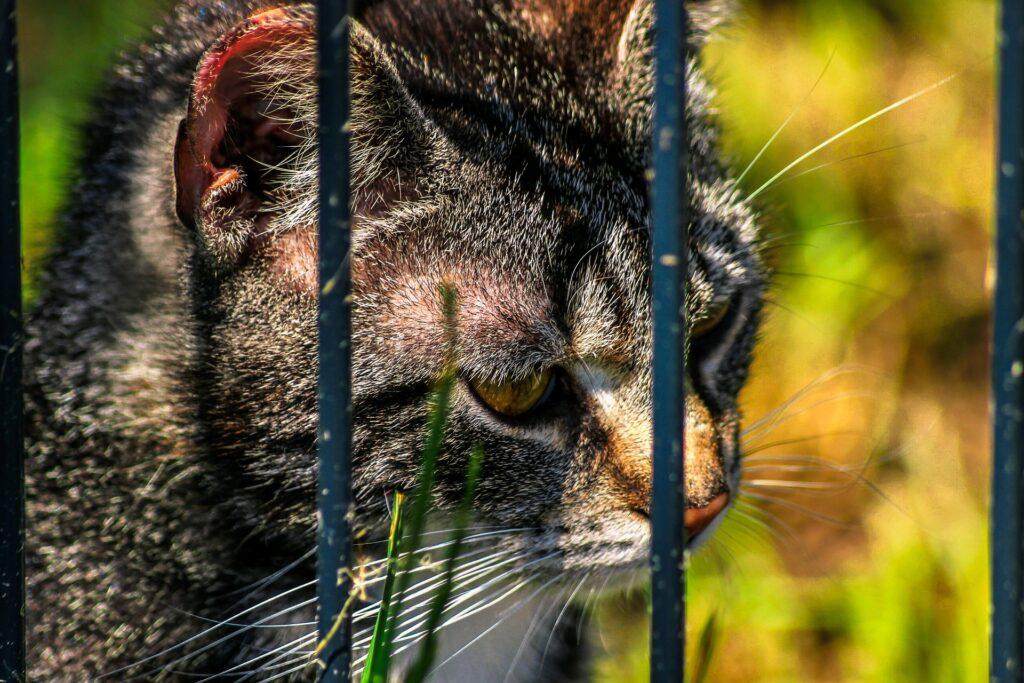 gattino dietro a delle sbarre