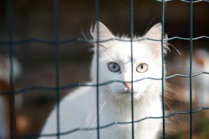 gatto bianco dietro una rete