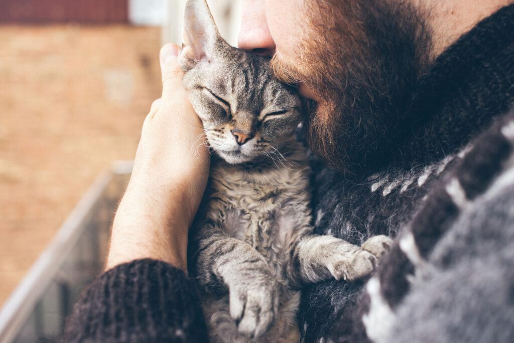 gatto amato