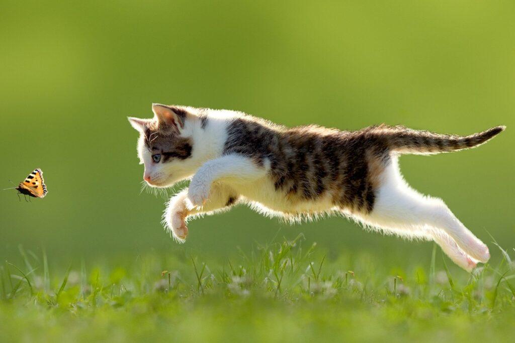 gattino insegue farfalla