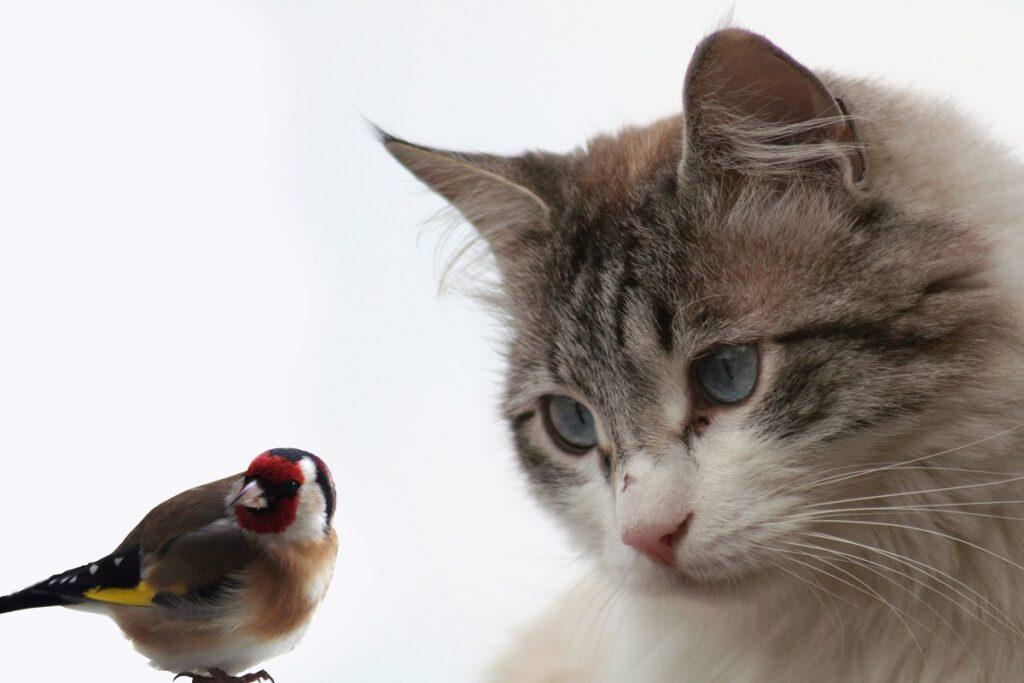 gatto osserva uccellino