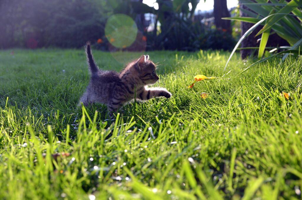 gattino gioca su un prato