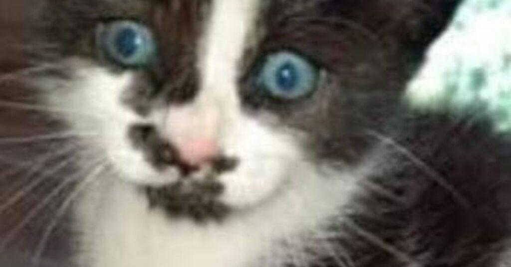 gattino dagli occhi chiari