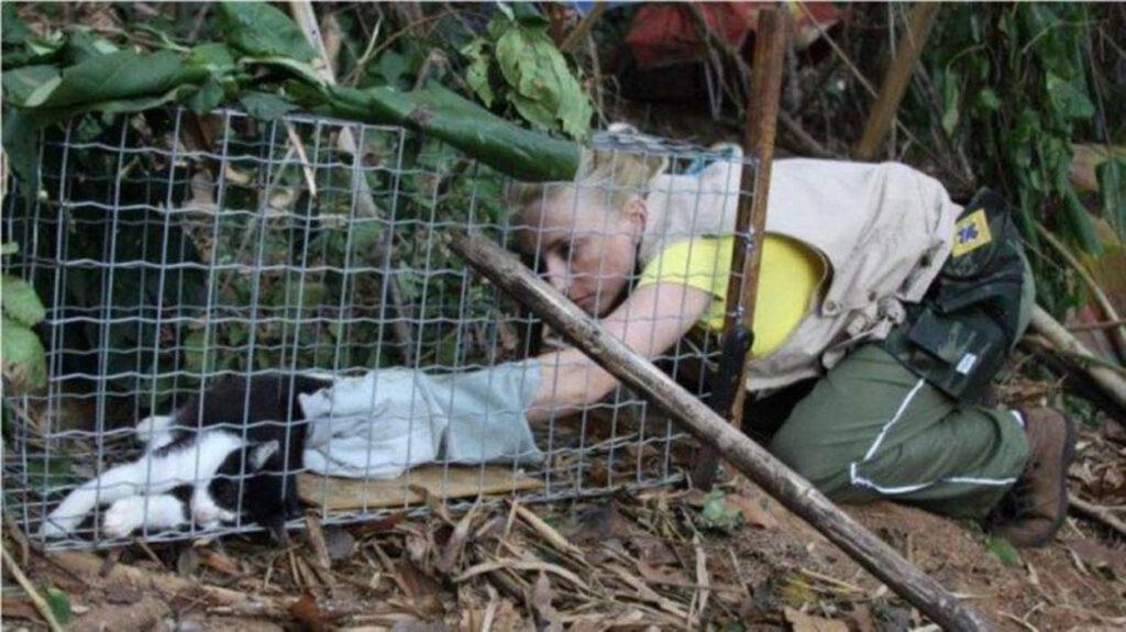 donna salva gatto in gabbia-trappola
