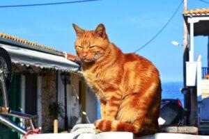 gatto rosso vicino al mare