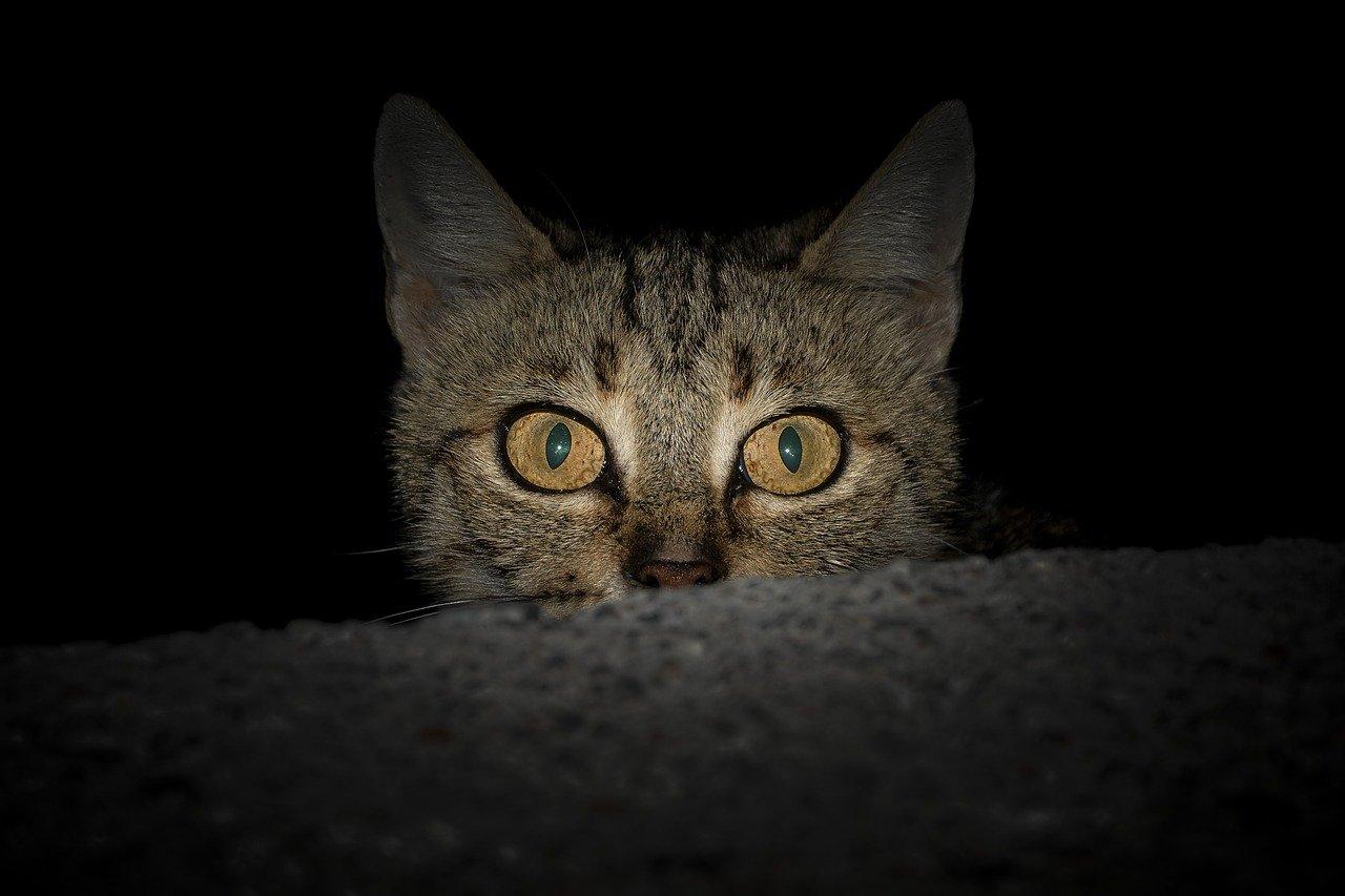 gatto occhi sbarrati