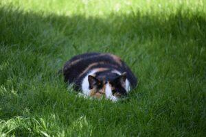 gatto fra l'erba