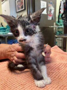 gattina dal veterinario